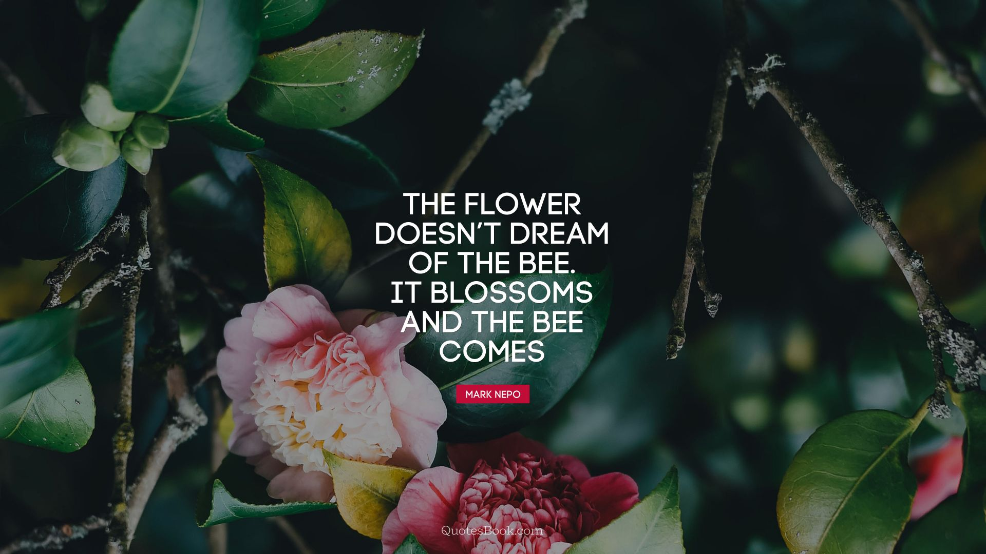 The flower doesn't dream of the bee. It blossoms and the bee comes. - Quote by Mark Nepo