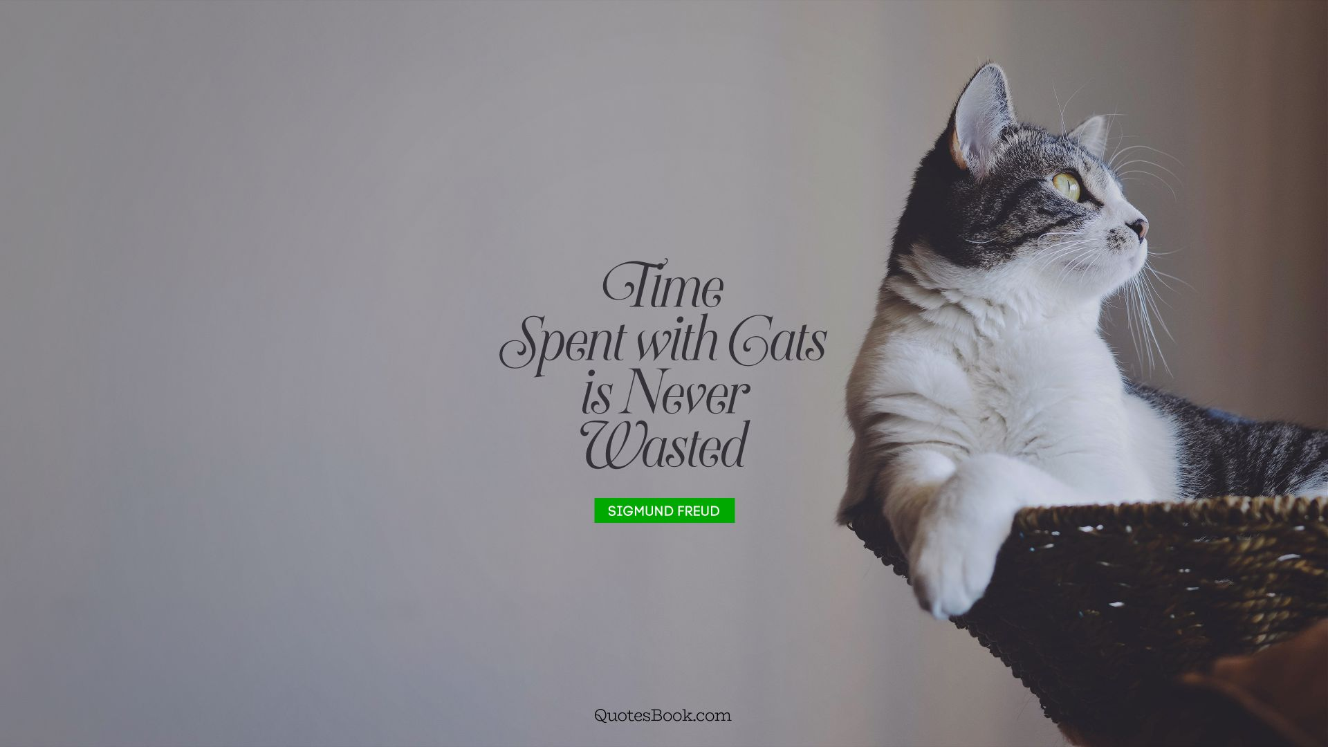 Time spent with cats is never wasted. - Quote by Sigmund Freud