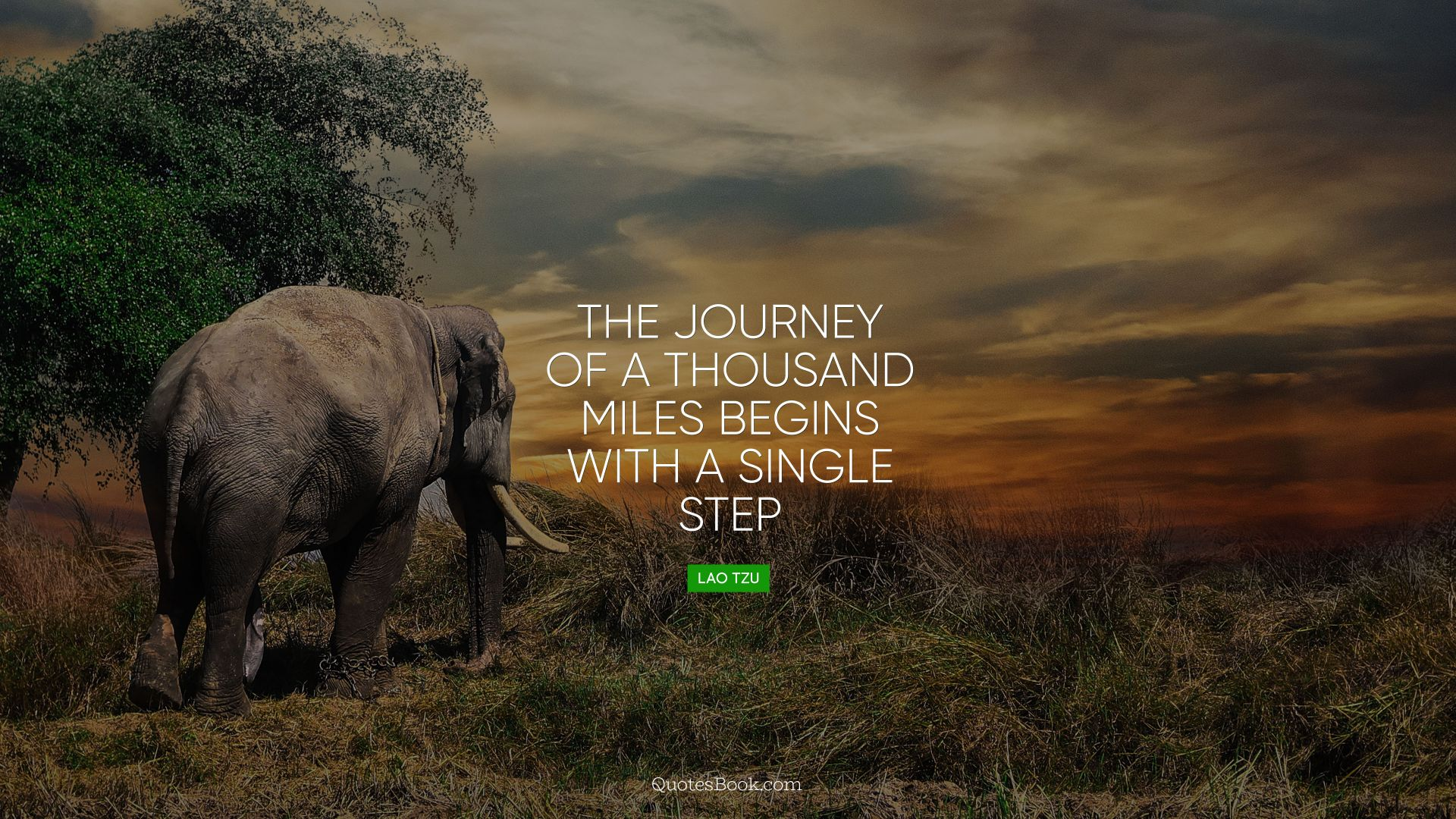 The journey of a thousand miles begins with a single step. - Quote by Lao Tzu