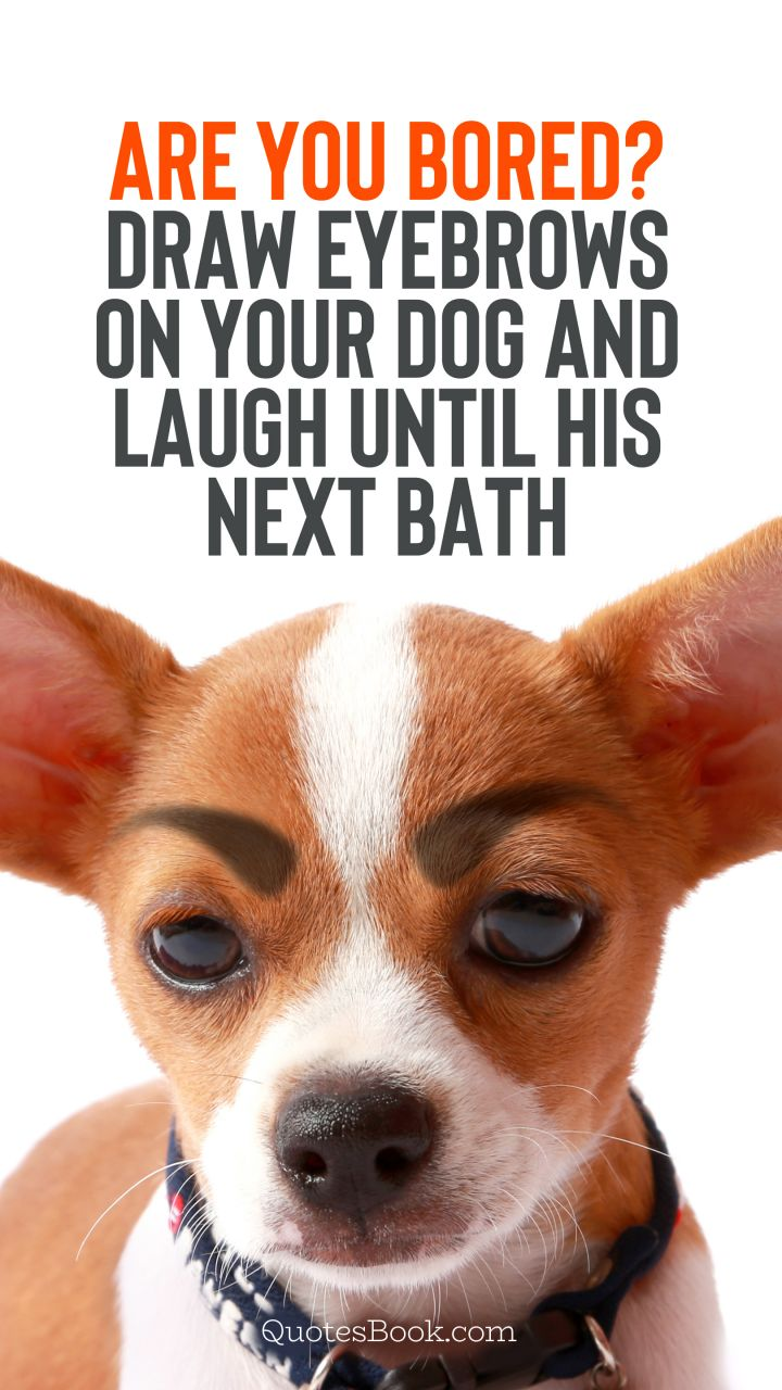 Are You Bored Draw Eyebrows On Your Dog And Laugh Until His Next