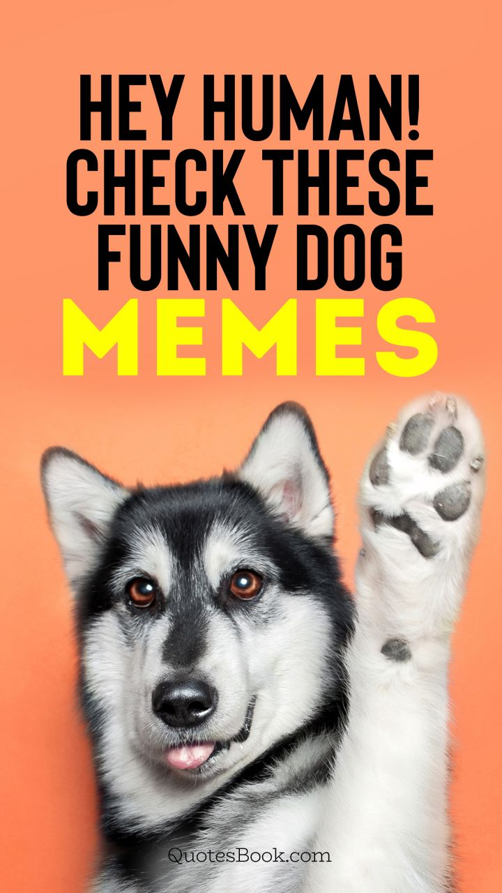 Hey human! Check these funny dog memes