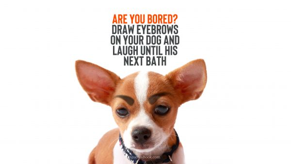 Are you bored? Draw eyebrows on your dog and laugh until his next bath