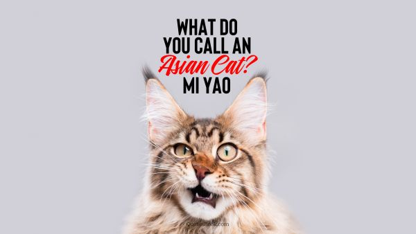 Memes Quote - What do you call an asian cat? Mi yao. Unknown Authors
