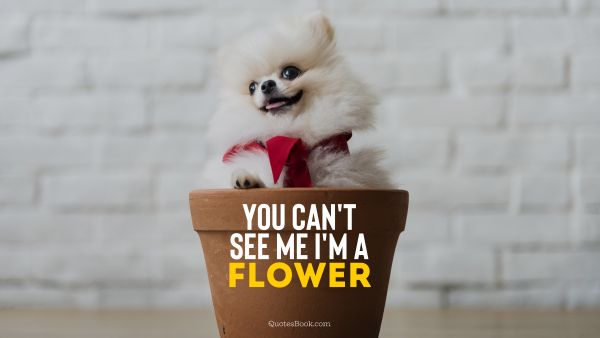 RECENT QUOTES Quote - You can't see me I'm a flower. Unknown Authors
