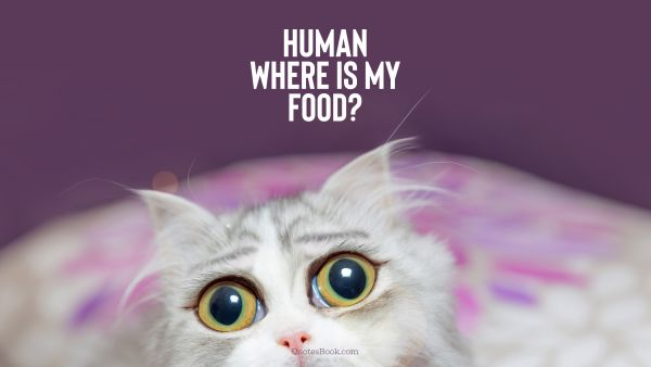 Funny Quote - Human where is my food?. Unknown Authors