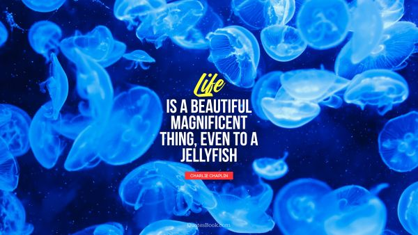 Life is a beautiful magnificent thing, even to a jellyfish