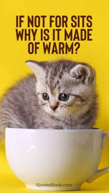 Memes Quote - If not for sits why is it made of warm?. Unknown Authors