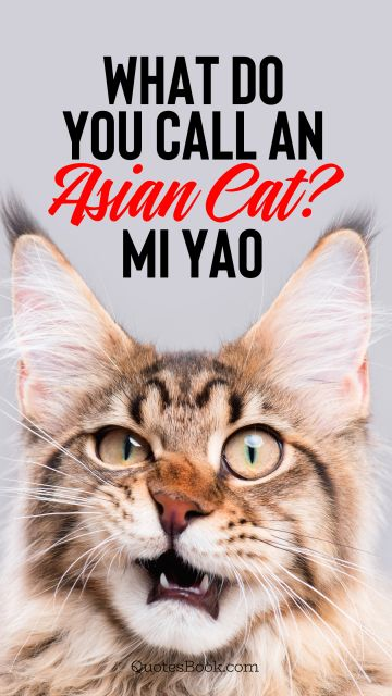 What do you call an asian cat? Mi yao