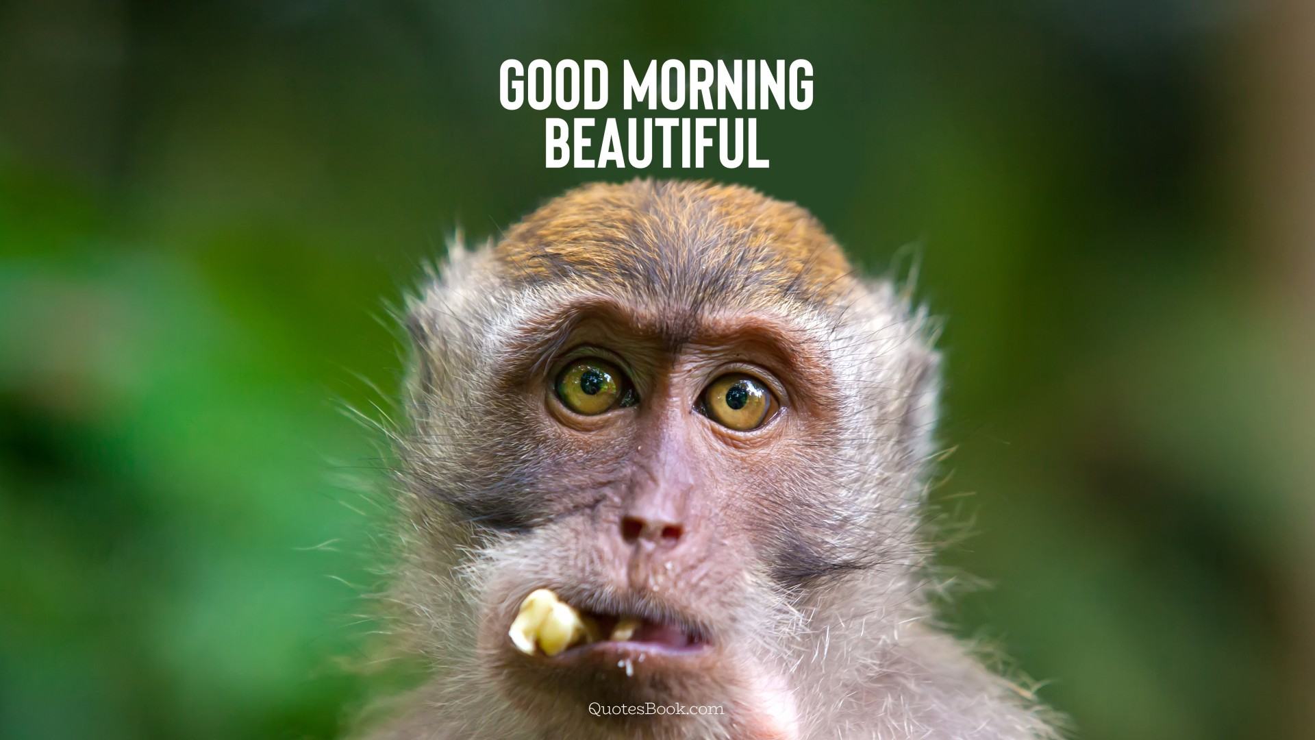 Good morning beautiful - QuotesBook