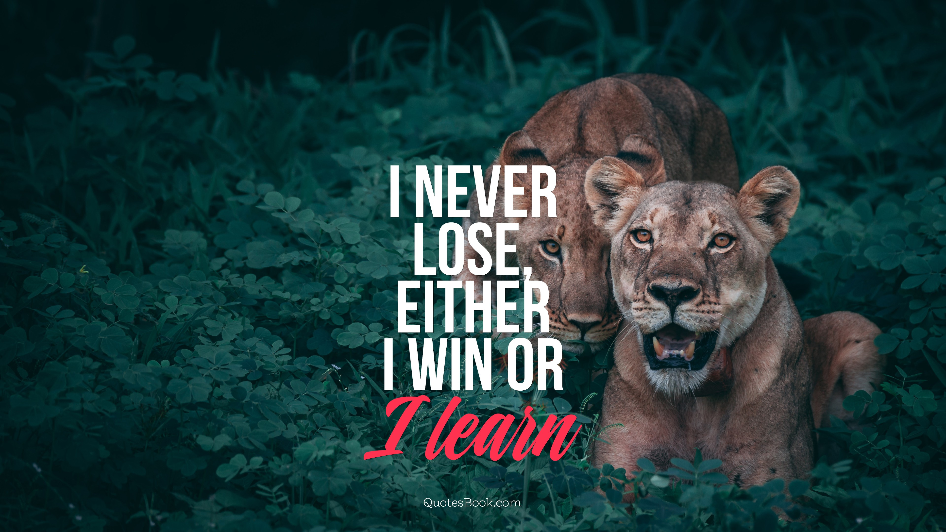 I Never Lose Either I Win Or I Learn Quotesbook